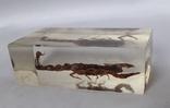 Скорпион в оргстекле, фото №2
