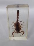 Скорпион в оргстекле, фото №3
