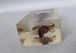 Скорпион в оргстекле, фото №4
