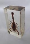 Скорпион в оргстекле, фото №6