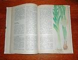 Пряности и специи, 1995 г., фото №7