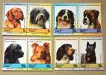"""Серія """" Фауна. Собаки """" Тувалу. 1985р. MNH., фото №3"""