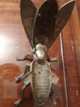 Муха бронзовая, фото №9
