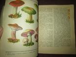 Грибная кухня народов мира -2 книги, фото №4