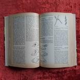 Кулинарная книга на немецком языке 1968 г. ГДР, фото №12