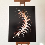 Картина/ живопис/ абстракція Fluid Art #18 acrylic, фото №2
