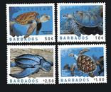 Барбадос 2007 - Фауна.Черепахи., фото №2