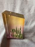 Сувенир с моря СССР, фото №2