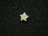 Звёздочка (разновидность морской лилии) №3, фото №2