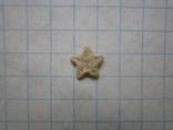 Звёздочка (разновидность морской лилии) №3, фото №5