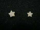 Звёздочки (разновидность морской лилии) 2шт. №4, фото №2