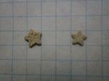 Звёздочки (разновидность морской лилии) 2шт. №4, фото №5