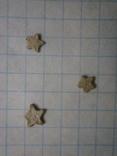 Звёздочки (разновидность морской лилии) 3шт. №6, фото №5