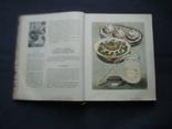 Книга о вкусной и здоровой пище 1964г, фото №5