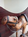 Верблюд, фото №3