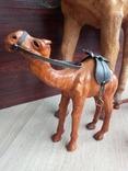 Верблюд, фото №4