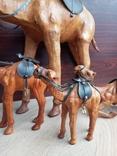Верблюд, фото №5