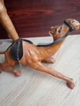 Верблюд, фото №8