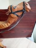 Верблюд, фото №10
