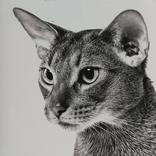 "Контейнер металлический ""Кошки"", фото №11"