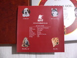 Набор из 4 монет - Год Собаки - серебро 999 - ПОЛНЫЙ КОМПЛЕКТ, фото №7