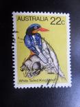 Фауна. Австралия. Птица. гаш, фото №2