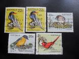 Фауна. Австралия. Птицы. гаш, фото №2
