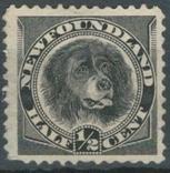 Бе03 Британские колонии. Ньюфаундленд 1894 №41 (*) (12 евро), фото №2