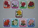 Флора цветы новая зеландия на, фото №2