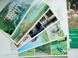 """Набор открыток """"Заповедник Аскания-Нова"""" 2 комплекта, фото №3"""