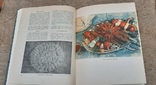 Азербайджанская Кулинария 63год Первое издание, фото №8