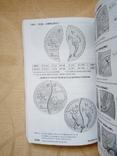 Каталог польських монет, фото №8