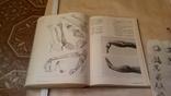 Анатомия тела, фото №13