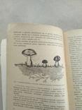 Domowe przetwory grzybowe 1959р, фото №4