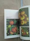 Овочі і фрукти в нашому харчуванні 1988р, фото №6