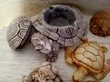 Коллекция черепашек, черепашка. 25штук одним лотом., фото №8