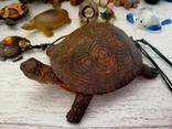 Коллекция черепашек, черепашка. 25штук одним лотом., фото №10