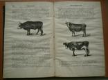 Книга Краткое руководство к сельскому хозяйству 1880, фото №11