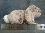 Кролик Индонезия, фото №8