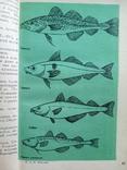Морская рыба (Б.Никитин, 1970), фото №7
