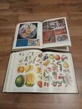 Украинский советский энциклопедический словарь -2 тома, фото №5