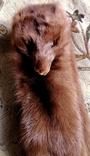 Горжетка норка., фото №3