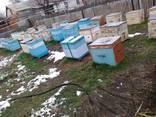 Мед ведро меда 15 килограмм photo 5