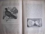 Эволюция мира ( том 3 ), фото №8