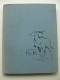 1960 Заповедник Аскания-Нова, фото №2