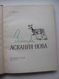 1960 Заповедник Аскания-Нова, фото №6