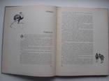 1960 Заповедник Аскания-Нова, фото №8