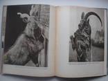 1960 Заповедник Аскания-Нова, фото №10