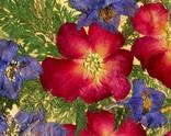 Цветочная фантазия, композиция из засушенных цветов и листьев photo 3