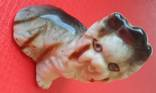 Маленькая собачка, фото №7